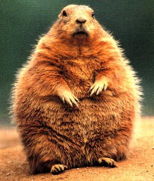 Groundhog%20enorme%20toute%20grosse