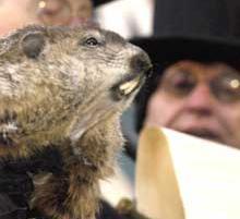 2 Février - Fête de la marmotte Phil-Groundhog_Day_04