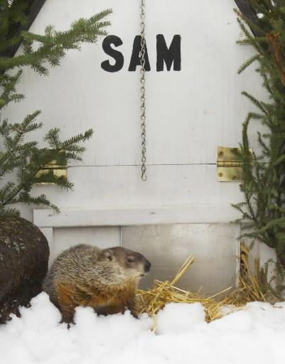 2 Février - Fête de la marmotte Sam_Marmotte