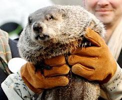 2 Février - Fête de la marmotte Chuckgroundhog1