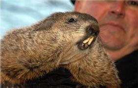 2 Février - Fête de la marmotte Phil-bill-01